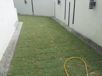 Jenis Rumput Tanam Rumput landscap pokok