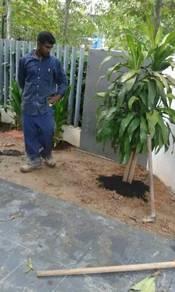 Pokok potong dan rumput Tanam