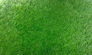 Landscap dan tanam rumput dan okoko potong