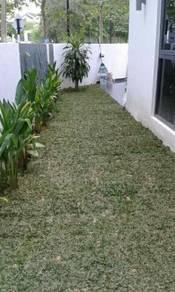 Pokok potong dan Tanam rumput