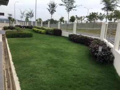 Grass/ Rumput / Philippine Grass