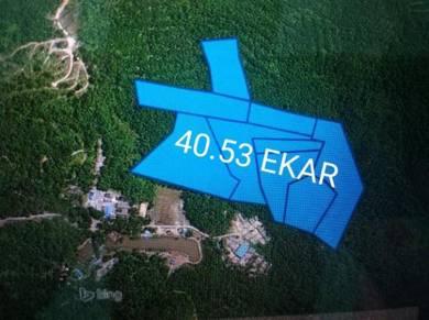 Tanah KUALA BERANG 40.53 EKAR