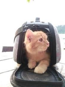 Beg kucing