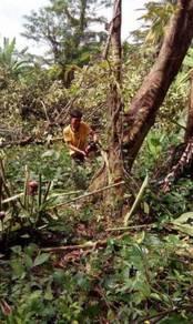 Tebang pokok dan Potong rumput area seremban