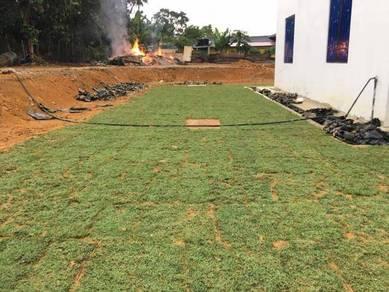 Rumput Karpet dan pakej lanskap