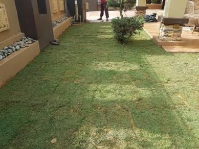 Tanam rumput pokok tiruan Japan Philipn pearl