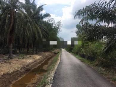Oil Palm Plantation Parit Raja Batu Pahat