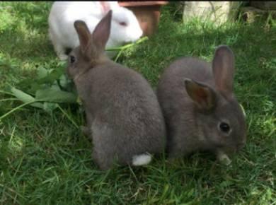 Rabbit minirex mixed
