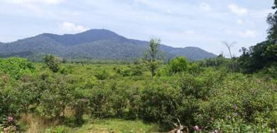 Tanah FREEHOLD NON BUMI.25 EKAR SUNGAI TONG