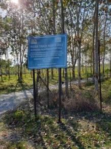 Tanah Sawit Muda Di Pokok Sena Untuk Dijual