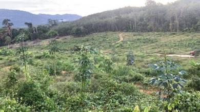 Durian and Rubber Farm, Mukim Semantan, Lanchang, Temerloh, Pahang