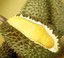 Durian Farm Land, Teluk Kumbar, Penang