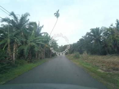 Benut, pontian, agriculture land for sale