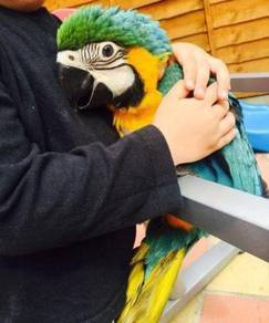 Nice quality Macaw blue wind parrots