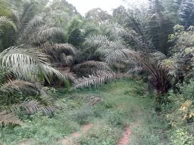 1. 1218 acres Agricultural Land Exevalley, Linggi, N. Sembilan