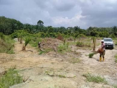 1.5 Ekar Tanah Sawit Umur 2 Tahun Segamat
