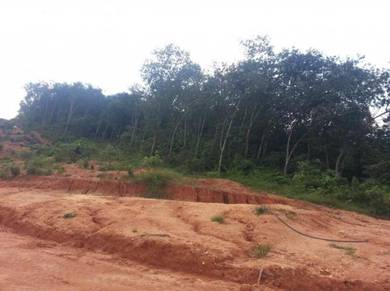 Freehold Agriculture Land Broga Semenyih