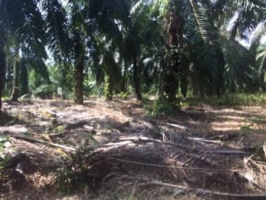 Jenjarom,Telok Panglima Garang,Banting Agriculture Zonning Industrial