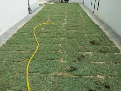 Halaman Rumah Tanam Rumput ada tiruan plan seuma