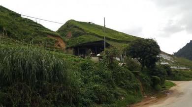 Freehold agricultural land ringlet cameron highlands jalan boh