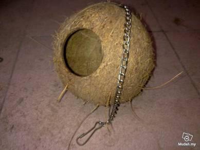 Coconut Hide Out