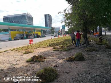 Projek kerja tanam rumput&pokok KL2302