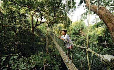 Greenleaf # full day package taman negara