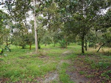 3-Acre Agricultural Land For Sale, Mantin
