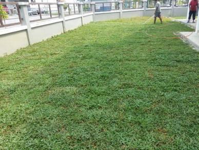 Service tanam Rumput seuma ada pokok artificial po