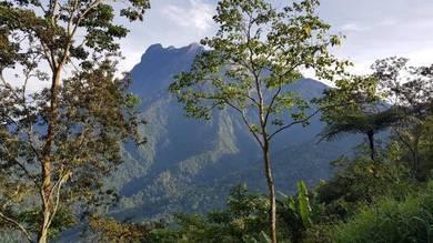 Kundasang Ranau Mount Kinabalu View CL Land Tanah
