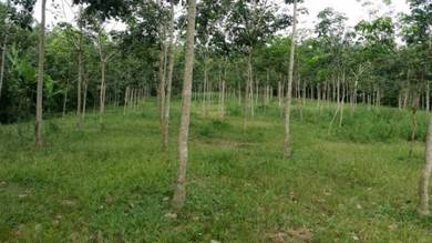 Two lot agricultural land for sale locality at Kampong Charok Mokkan