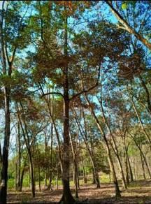 Tanah 3.125 ekar Kalumpang Hulu Selangor rizab Melayu FREEHOLD