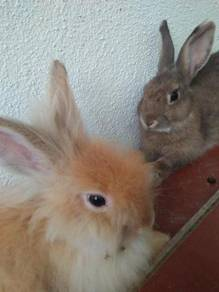 1 Mix Lionhead Rabbit, 2 Mix Var ( Cage,Food,etc)