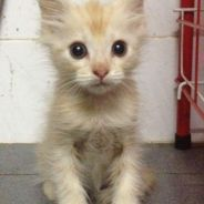 Kitten (marble)