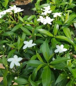 Shrubs, trees, herbs, indoor plants