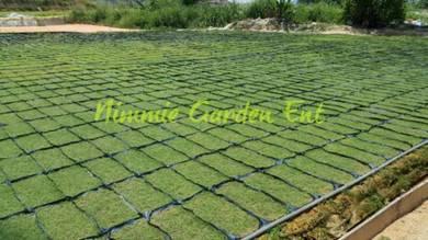 Cow Grass Murah