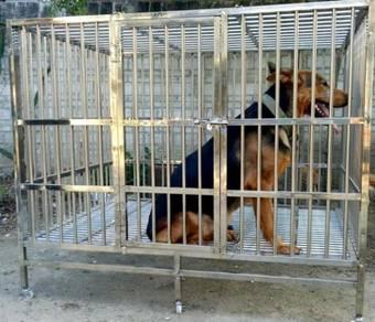 Sangkar kuching Cat or Dog STAINLESS STEEL Cage
