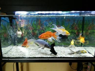 Ikan Koi dan goldfish