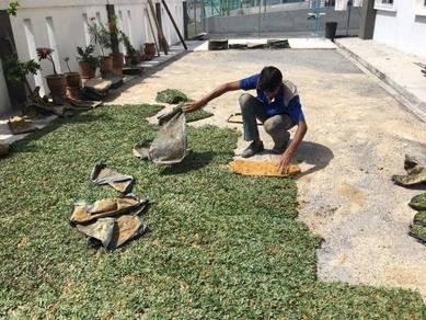 Grass Planting service