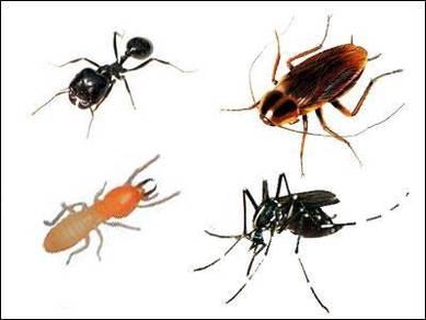 Pest control - SEMUT. LIPAS.TIKUS.PIJAT.ANAI2