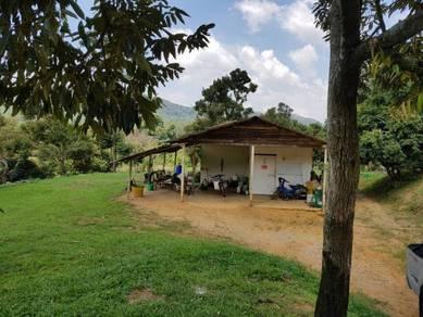 Tanah Dusun Musang King, Raub, Pahang