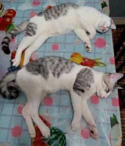Kucing Untuk Diberi Secara Percuma