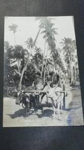 Antik Bullock Straits Settlements 1920 PC 1631