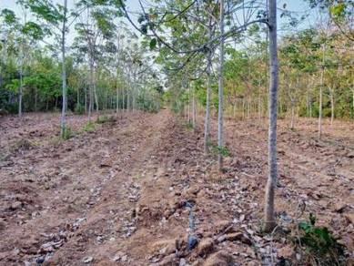 Tanah 41 ekar Jelebu Negeri Sembilan