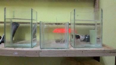 Aquarium Akuarium