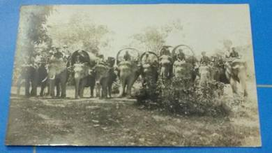 Antik Postcard Elephant 1920 PC 1633 RARE