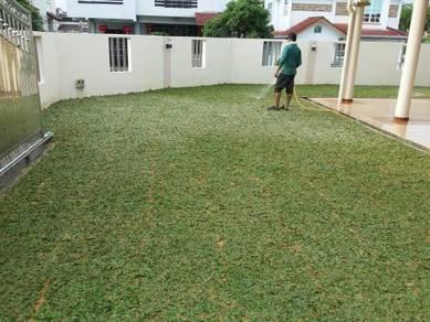Tanam rumput pokok tiruan Japan philippine perl