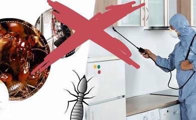 Terus matikan habis Anai semut putih berhentikan