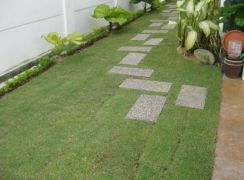 Penang Philippine and Japanese Grass contractor