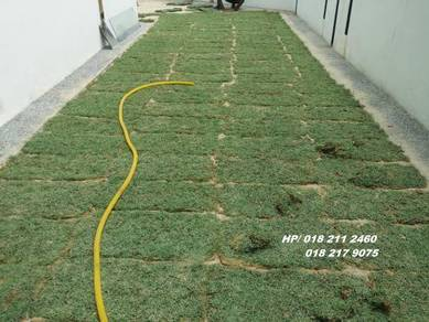 Carpet gras rumput philipine japanese ALL